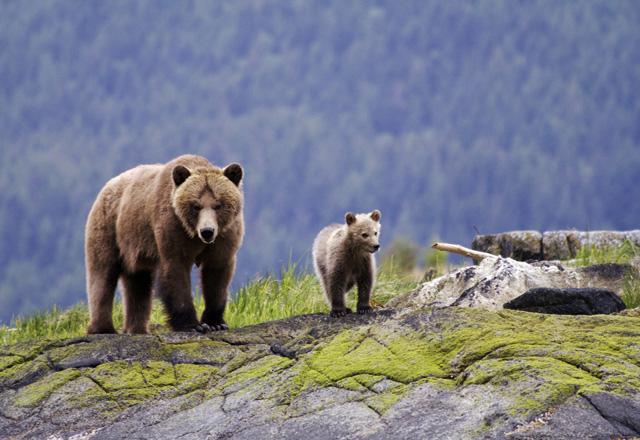 Entdecken Sie die wilden Tiere Kanadas