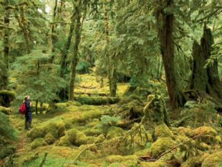 Westkanadas Regenwälder, British Columbia