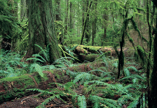 Kanadas Regenwälder in den Nationalparks hautnah erleben