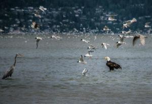 Westkanadas Tiervielfalt