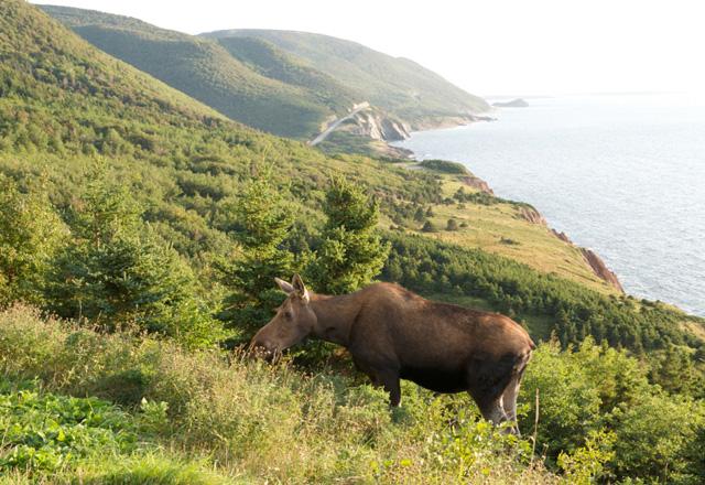 Nova Scotia Mietwagenreise Tierwelt