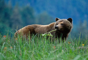 Great Bear Nature Tours