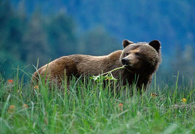 Great Bear Nature Tours
