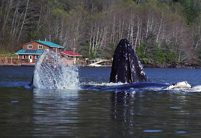Die Great Bear Lodge besticht mit Ihrer Lage in der Natur