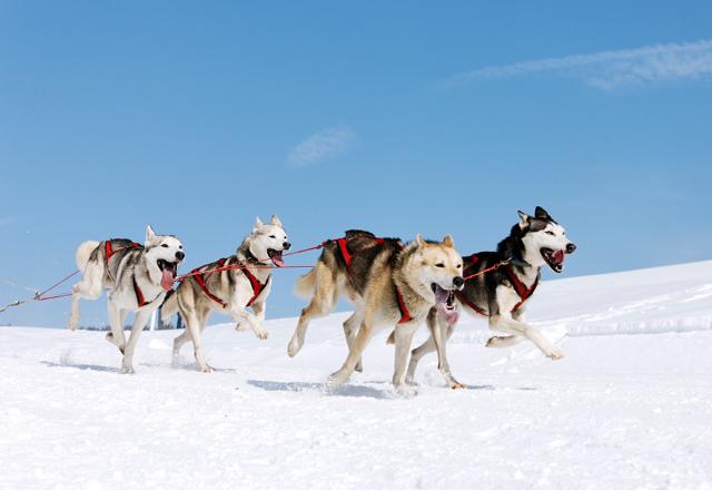 Besuch im Yukon