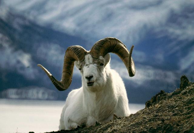 Tiere beobachten in den Nationalaparks in Kanada