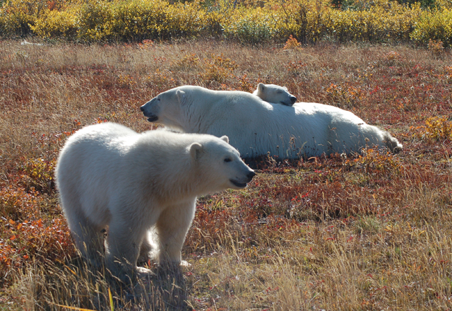 Nanuk Polar Bear Lodge - Die Eisbaerenlodge