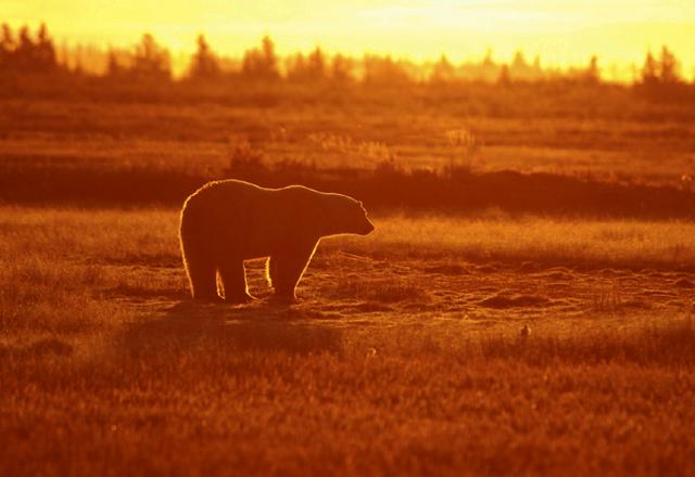 Sie haben die Möglichkeit die Polar Bären von nächster Nähe zu beobachten