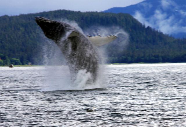 Walbeobachtungstouren