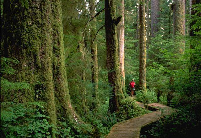 Wandern im Regenwald in Kanada