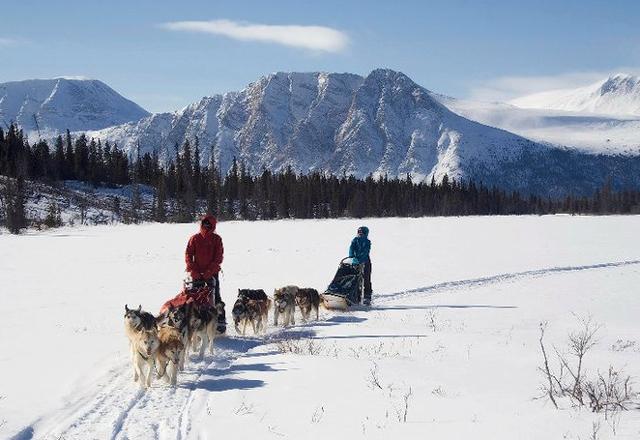 Eine Hundeschlittenfahrt im Yukon wird Sie begeistern