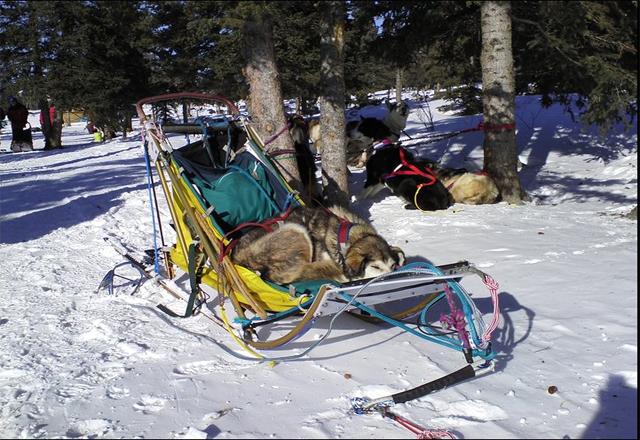 Mit Hundeschlitten durch gebiete des Yukon, Kanada