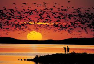 Tierwelt in den Nationalparks und der Küste von Westkanada