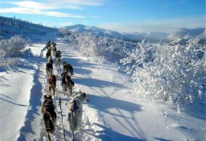 Yukon Husky Tour – Einsteiger