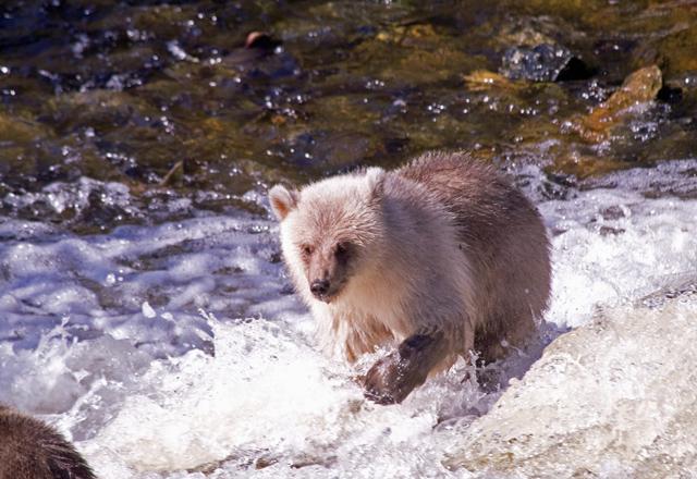 Entdecken Sie die Vielfalt Alaskas