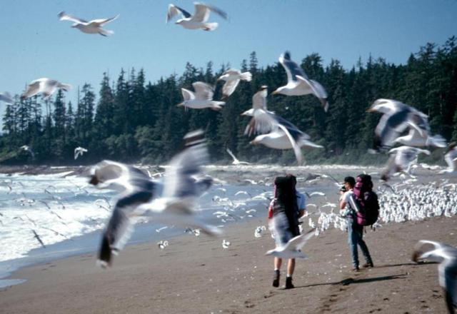 Küste in British Columbia
