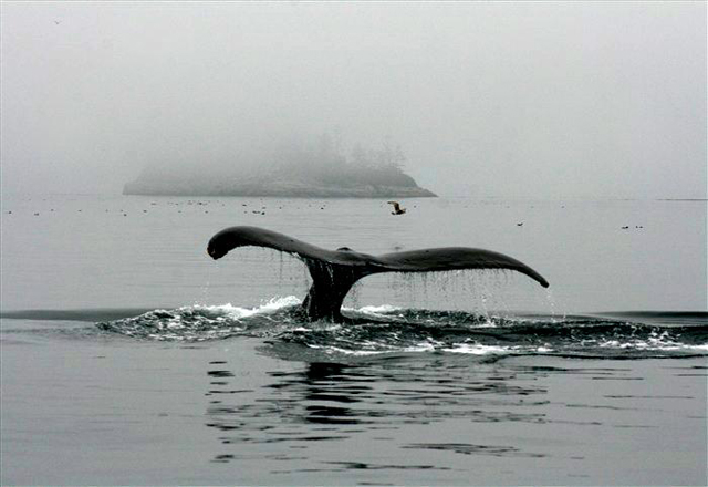 Walflosse Tour Kanada