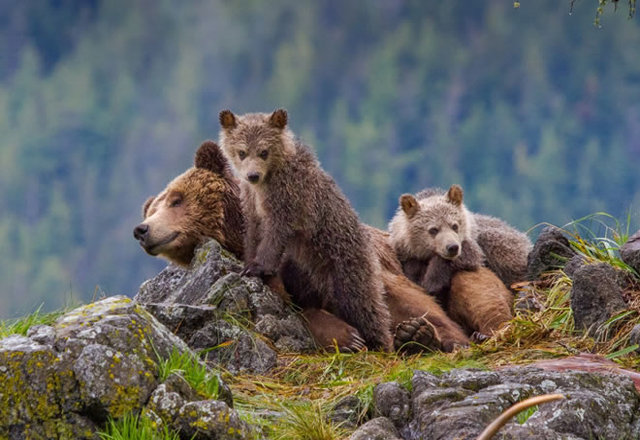 British Columbia Bärenbeobachtung