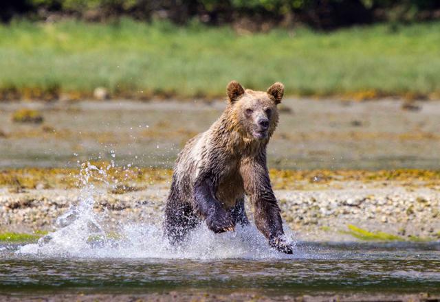 Junger Bär gesichtet in Kanada