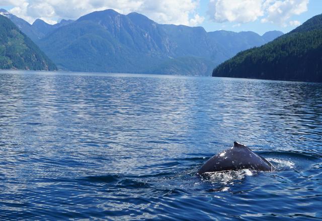 Von der Fähre aus die Naturwunder Kanadas erleben
