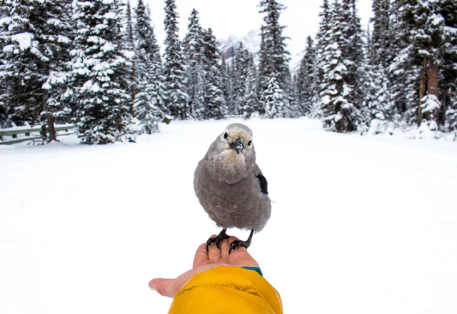 Schneelandschaft Kanada