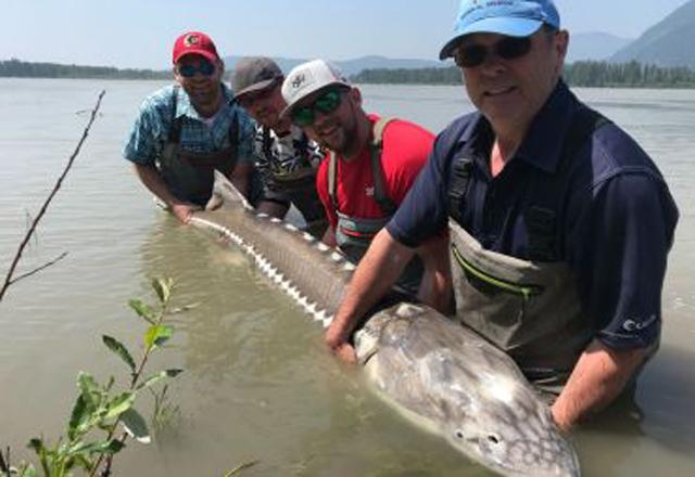 Fisch auf der Fraser River Lodge