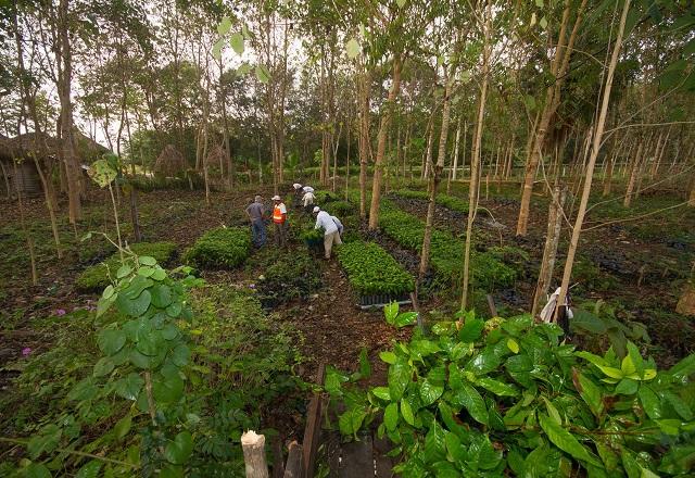 Bäume anpflanzen Plant for the Planet