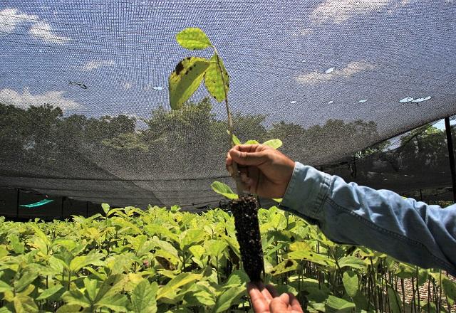 Sätzlinge Bäume Plant for The Planet