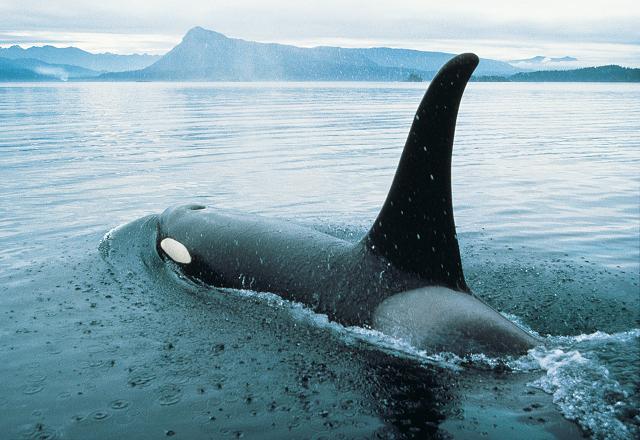Wale beobachten Kanada
